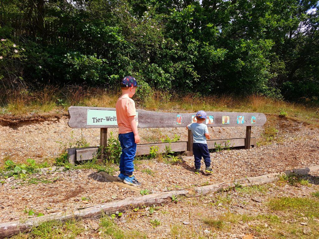 Wandern mit Kindern im Harz bei den Bisons. Tierweitsprung am Wanderweg.