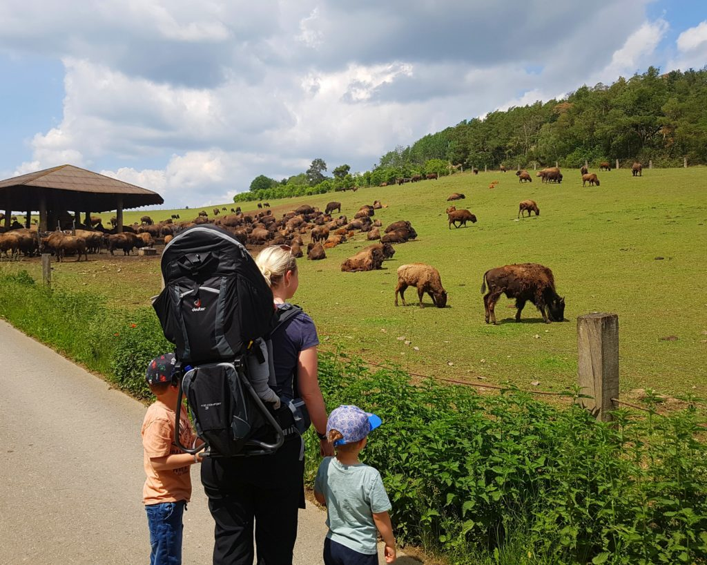 Blick über das Bisongehege in Stangerode mit den Kindern