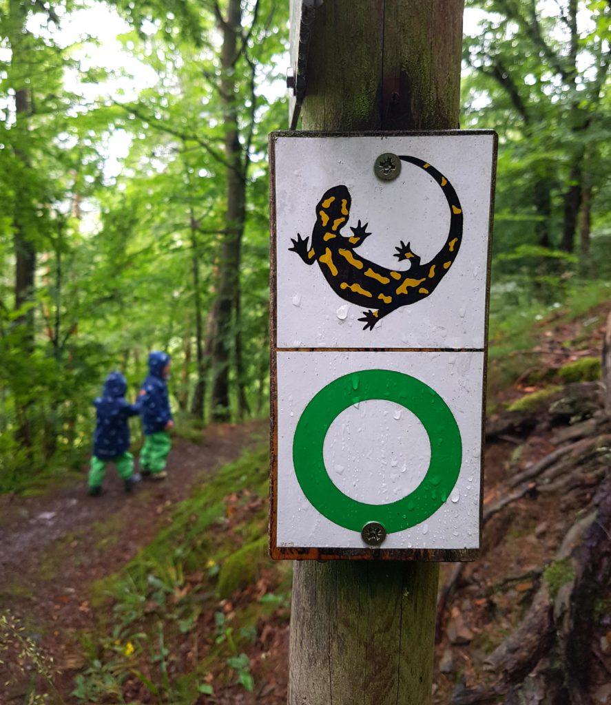 """Beschilderung des Wanderweges """"Dem Feuersalamander auf der Spur"""". Der Feuersalamander zeigt den Weg."""