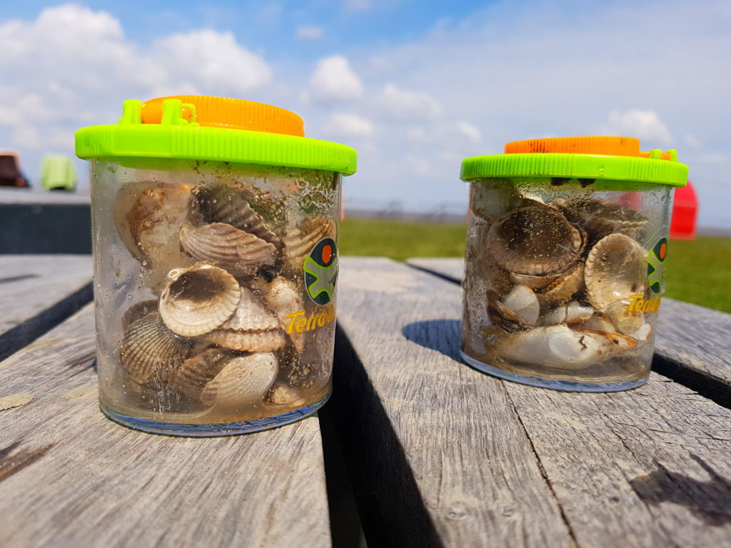 Haba Terra Becherlupen gefüllt mit Muscheln