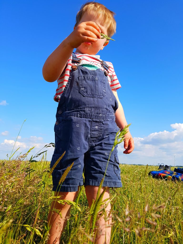 ein Junge spielt mit einem Grashalm auf dem Deich an der Nordsee, Balje, Elbe