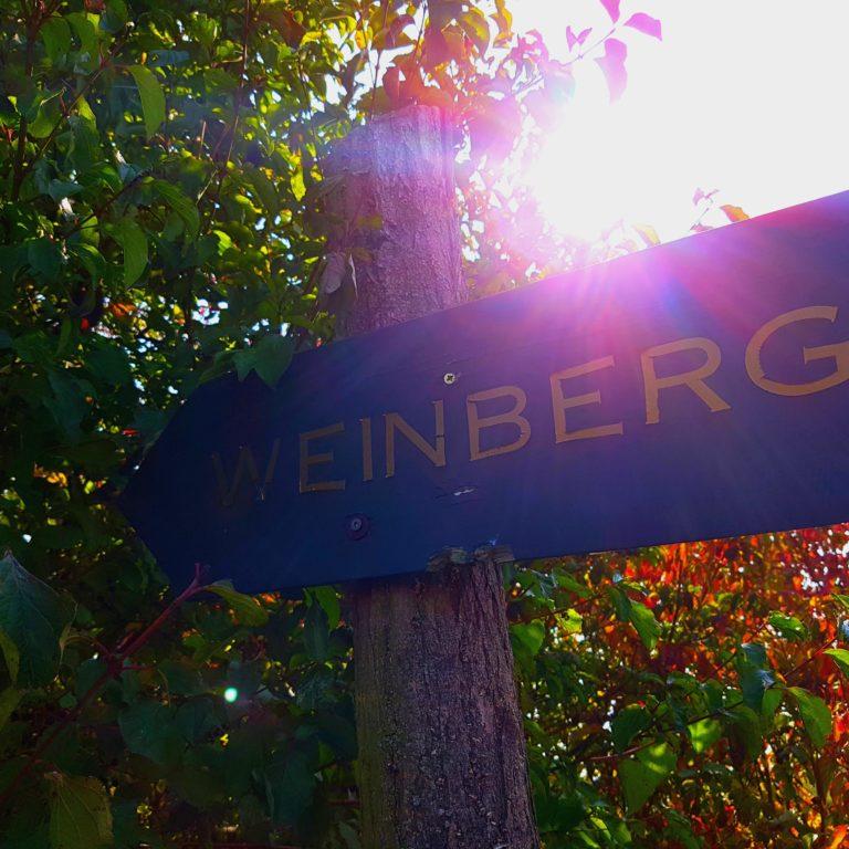 """Wegweiser zum Weinberg am Geiseltalsee """"Goldener Steiger"""""""