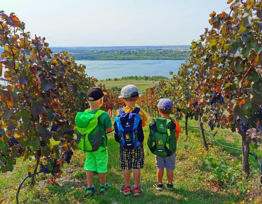Kinder schauen den Weinberg Goldener Steiger zwischen den Weinreben hinab