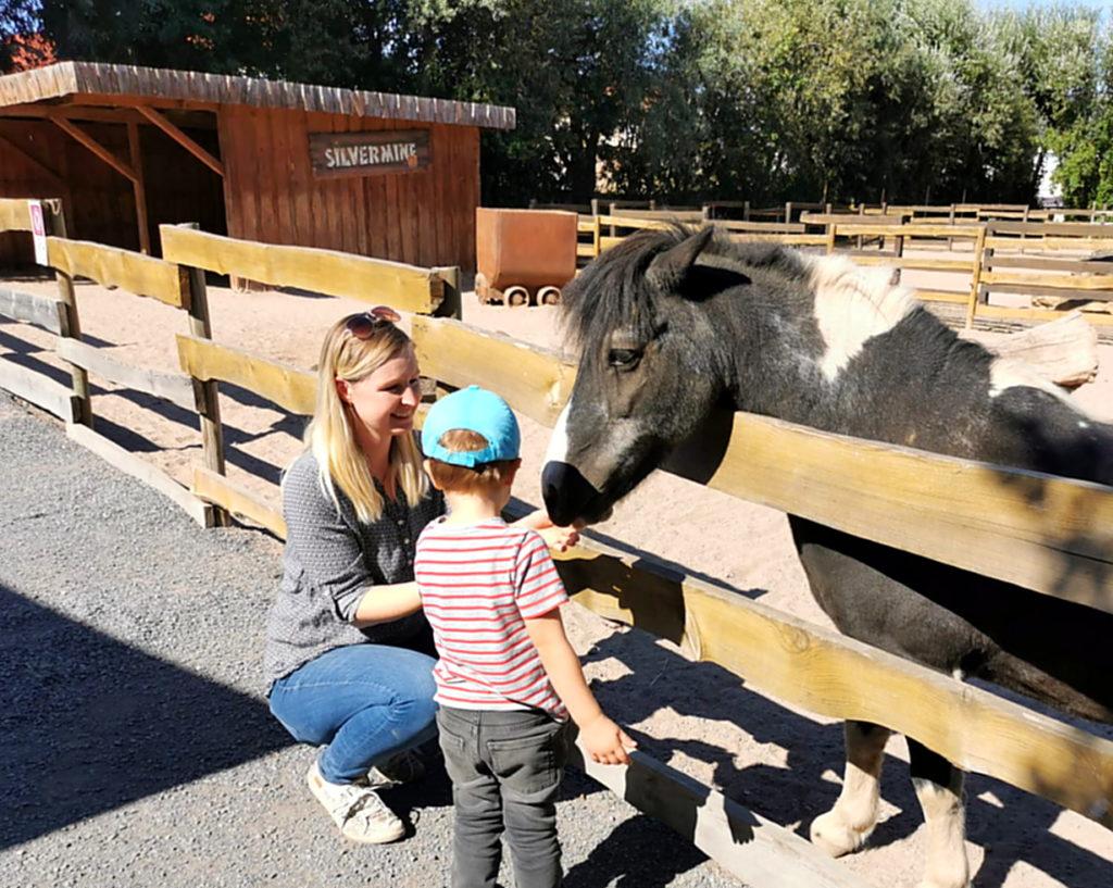 Pony füttern und streicheln im Tierpark Melmeben
