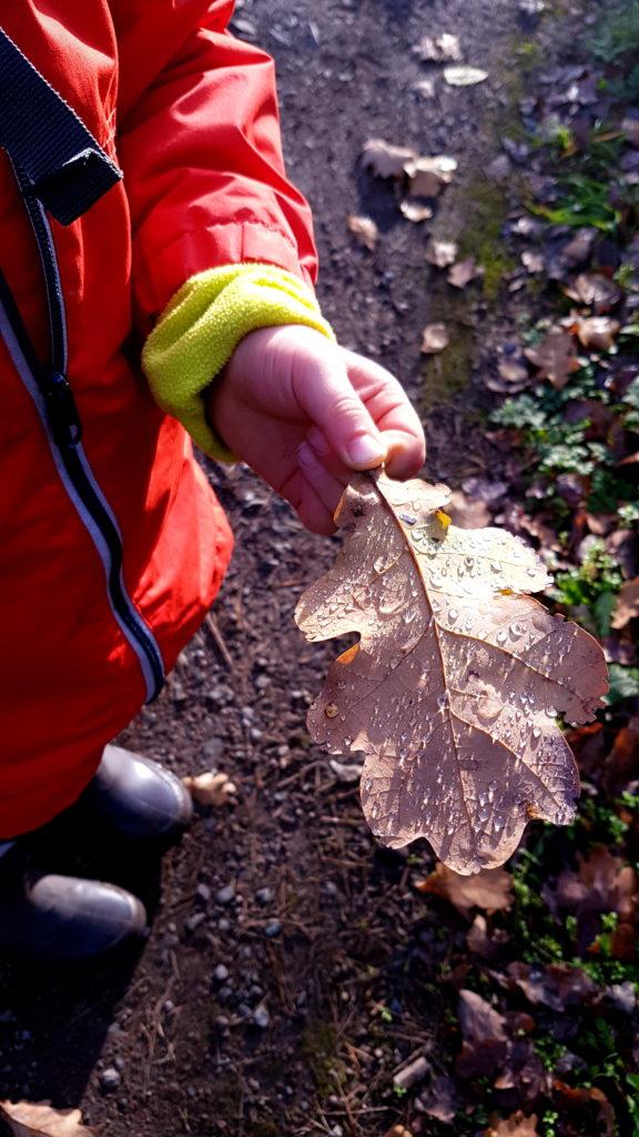 Kind sammelt Blätter bei Regen