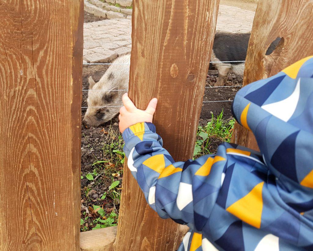 Kind schaut sich die Schweine im Südpark Merseburg an, Lockdown Ausflüge Kinder