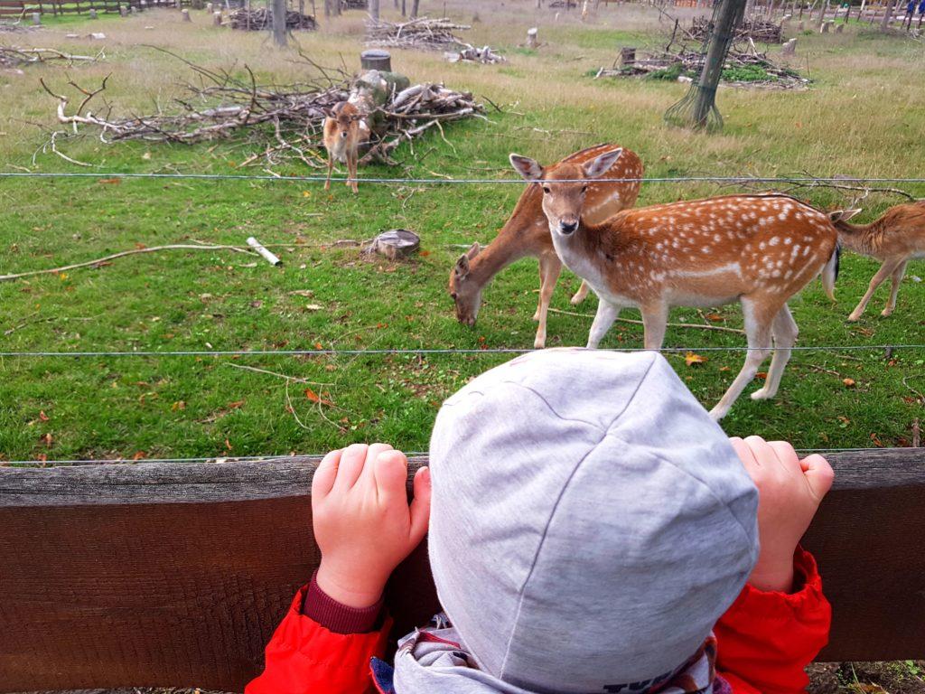 Der Große schaut sich das Wild im Südpark an.