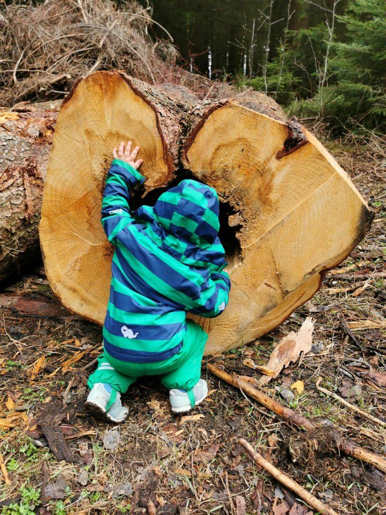 Kleinkind (Rabauken vom See) schut in ein Loch in einem Baumstamm auf dem Kinderwanderweg Naturmythenpfad im Harz